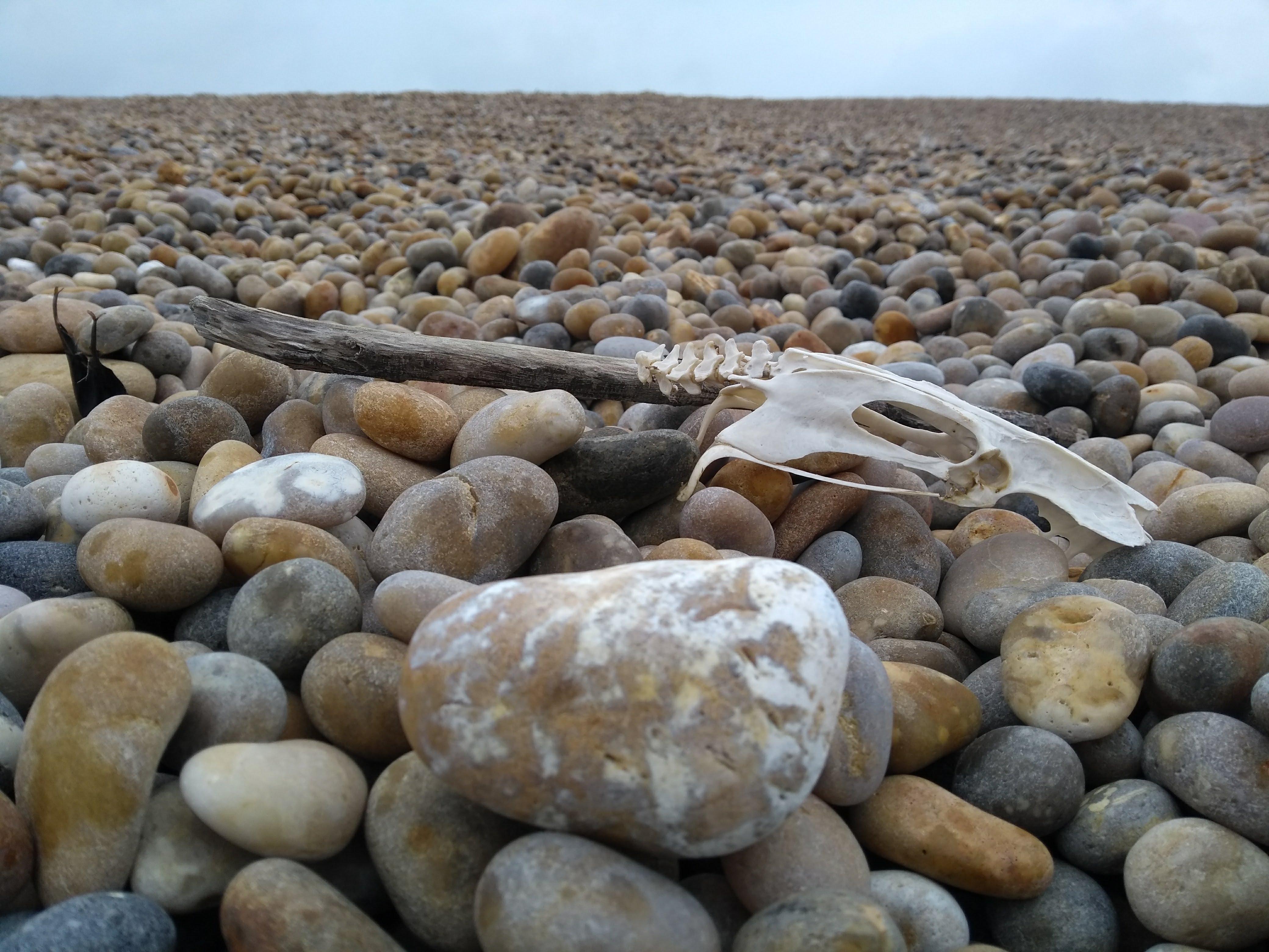skull on pebbly beach